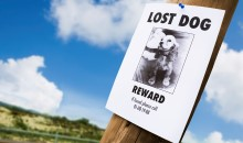 Landing image community and care lost your pet.jpg