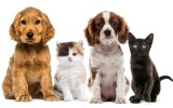Landing image community and care new pet registration.jpg